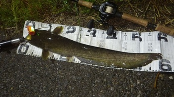 1(59.5cm).JPG